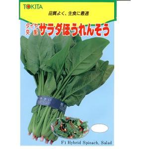 ほうれん草 ダイヤ交配・・・サラダほうれんそう・・・<トキタのほうれん草です。 種のことならお任せグリーンデポ>|green-depo-1