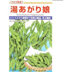 湯あがり娘は、カネコ種苗の茶豆風味の美味しい枝豆品種です。 ショ糖をはじめとする糖の含有率が高く甘み...