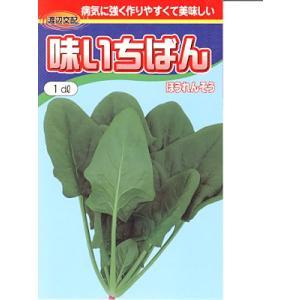 渡辺交配 味いちばんほうれん草 渡辺農事のほうれん草品種です。|green-depo-1