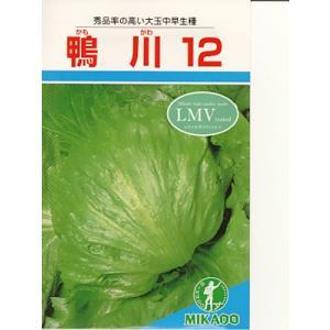 レタス種 ミカド・・・鴨川12・・・<ミカドのレタスです。種のことならお任せグリーンデポ>|green-depo-1