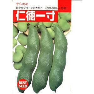仁徳一寸は、色が濃く鮮やかな緑色の一寸ソラマメです。   タキイのそら豆品種です。 見た目がきれいな...