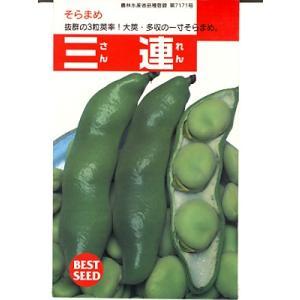 三連は、育てやすい一寸ソラマメです。    三連そら豆はタキイ種苗の育成品種です。 三連は、特に抜群...
