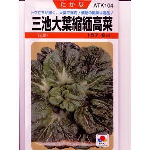高菜 タキイ 三池大葉縮緬高菜 <タキイの高菜です。種のことならお任せグリーンデポ>|green-depo-1
