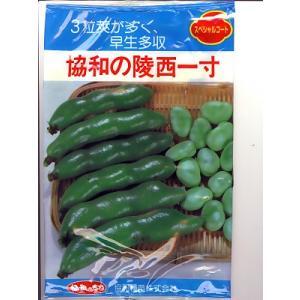 そら豆の種 みかど協和・・・協和の陵西一寸・・・<みかど協和の一寸そら豆です。種のことならお任せグリーンデポ>|green-depo-1