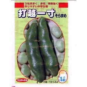そら豆の種 サカタのタネ・・・打越一寸・・・<サカタのそら豆です。種のことならお任せグリーンデポ>|green-depo-1