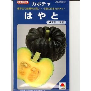 日本カボチャ種 タキイ交配 はやと <タキイのカボチャ種子です。種のことならお任せグリーンデポ>|green-depo-1