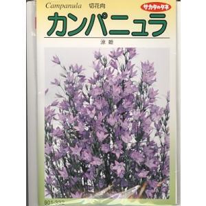 カンパニュラの種 サカタのタネ・・・涼姫・・・<サカタのカンパニュラです。種のことならお任せグリーンデポ>|green-depo-1