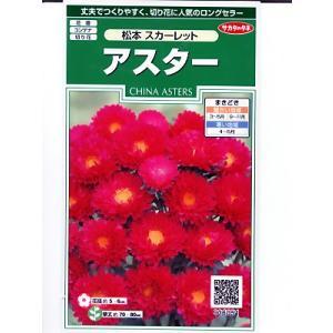 アスター種子 サカタのタネ・・・松本 スカーレット・・・<サカタのアスター種子です。種のことならグリーンデポ>|green-depo-1