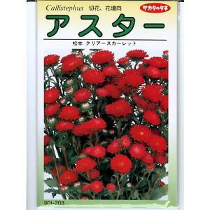 アスターの種 サカタのタネ 松本クリアスカーレット <サカタのアスター種子です。種のことならグリーンデポ>|green-depo-1