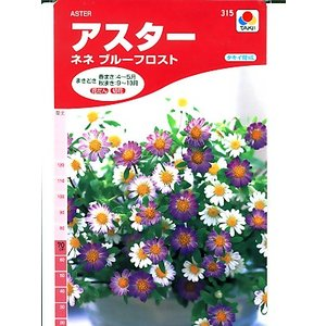 アスターの種 タキイ育成 ネネブルーフロスト <タキイのアスター種子です。種のことならグリーンデポ>|green-depo-1