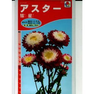 アスターの種 タキイ種苗・・・彗星・・・<タキイのアスター種子です。種のことならグリーンデポ>|green-depo-1