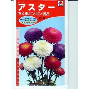 アスターの種 タキイ種苗 ちくまポンポン混合 <タキイのアスター種子です。種のことならグリーンデポ>|green-depo-1