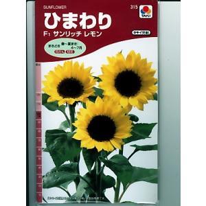 ひまわりの種 タキイ交配・・サンリッチレモン・・<タキイのヒマワリ種子です。種のことならグリーンデポ>|green-depo-1