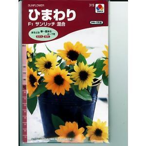 ヒマワリの種 タキイ交配・・サンリッチ混合・・・<タキイのヒマワリ種子です。種のことならグリーンデポ>|green-depo-1
