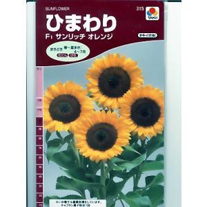 ヒマワリの種 タキイ交配・・サンリッチオレンジ・・<タキイのヒマワリ種子です。種のことならグリーンデポ>|green-depo-1