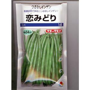 恋みどり タキイのつるなしインゲン品種です。種の通販ならグリーンデポ|green-depo-1
