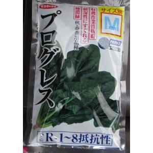 ほうれん草 サカタ交配 プログレスホウレンソウ  サカタのタネのほうれん草品種です。|green-depo-1