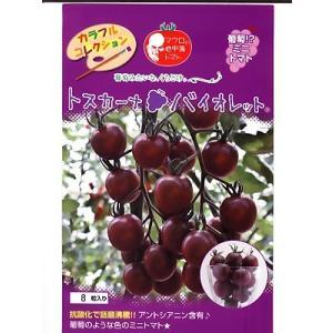 ミニトマト種子 トスカーナバイオレット   パイオニアエコサイエンスの紫ミニトマト品種です。|green-depo-1