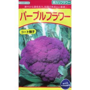 武蔵野種苗園 三芳交配・・・パープルフラワー・・・<武蔵野の紫カリフラワーです。種のことならグリーンデポ|green-depo-1