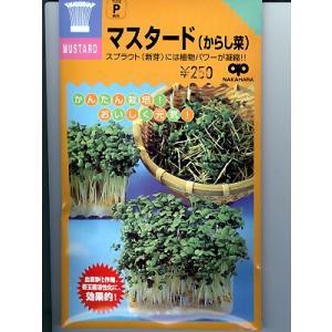 スプラウト種 マスタード(からし菜)<スプラウト用のマスタード種子です。>|green-depo-1