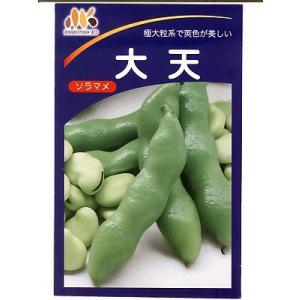 大天そら豆   みかど協和のソラマメ品種です。|green-depo-1