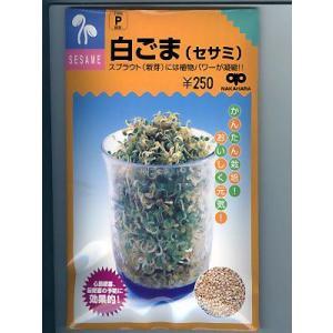 白ゴマ(セサミ) 中原採種場のスプラウト用のゴマ種子です。|green-depo-1