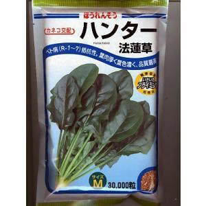 カネコ交配 ハンター法蓮草  カネコ種苗のほうれん草品種です|green-depo-1