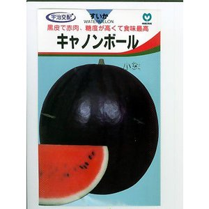 宇治交配 キャノンボールスイカ <丸種の大玉スイカ品種です。種の通販ならグリーンデポ>|green-depo-1