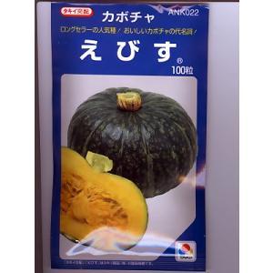 カボチャ種 タキイ交配 えびす   タキイのカボチャ種子です|green-depo-1