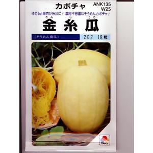 金糸瓜   そうめんカボチャの種です。野菜種をお探しならグリーンデポ|green-depo-1