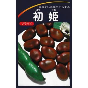そら豆種 初姫   みかど協和の蚕豆種子です。|green-depo-1