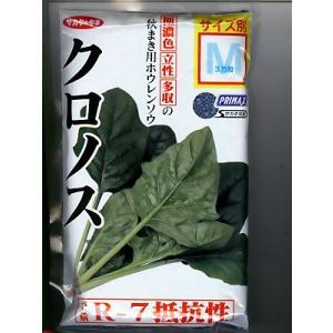 サカタ交配 クロノスほうれん草    サカタのタネのほうれん草種子です。|green-depo-1