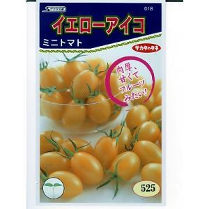 サカタ交配 イエローアイコ  サカタのタネのミニトマト品種です。