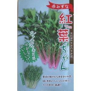 紅葉ちゃん 野原種苗の 赤水菜の種です|green-depo-1
