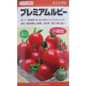 カネコ交配 プレミアムルビー  カネコ種苗のミニトマト品種です。|green-depo-1