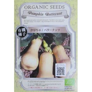 有機種子 かぼちゃ バターナッツ|green-depo-1