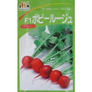 F1 ポピールージュ ラディッシュ  みかど協和の二十日大根品種|green-depo-1