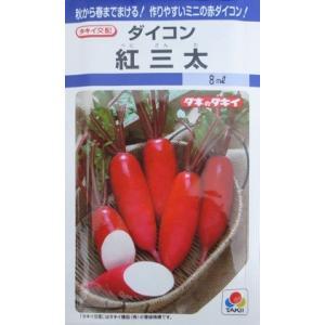 タキイ交配 紅三太ダイコン    タキイ種苗のミニ大根品種です。 green-depo-1