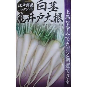 白茎亀井戸大根   関東の伝統野菜品種の大根|green-depo-1