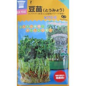 スプラウト種子 豆苗   中国野菜として人気、エンドウ豆のスプラウト種|green-depo-1