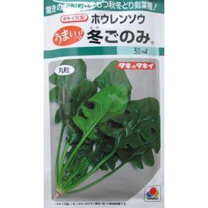 タキイ交配 冬ごのみホウレンソウ タキイ種苗のほうれん草品種です。|green-depo-1