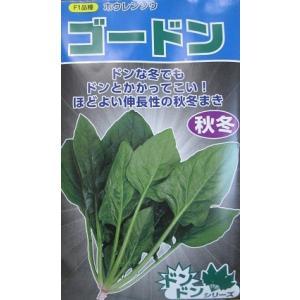 サカタ交配 ゴードンホウレンソウ   サカタのタネのほうれん草品種です。|green-depo-1