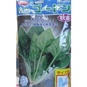 サカタ交配 ゴードンホウレンソウ サカタのタネのほうれん草品種です。 M3万粒入り規格|green-depo-1