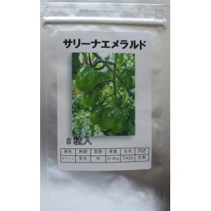 サリーナエメラルド  パイオニアエコサイエンスのミニトマト品種|green-depo-1