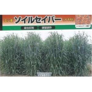 緑肥 エン麦 ソイルセーバー(イネ科) 春まきは、より一層の乾物収量が得られます  種・苗・農業資材...