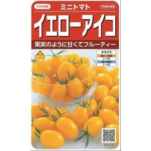 ミニトマト イエローアイコ  13粒 実咲 サカタ交配