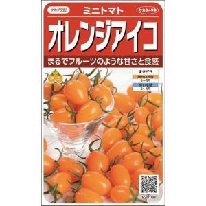 オレンジアイコ 13粒 実咲 サカタ交配