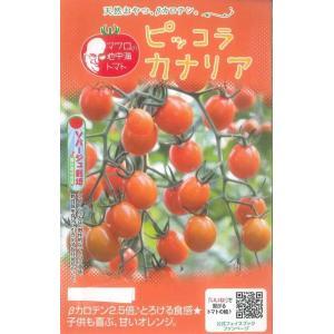 野菜種 ミニトマト ピッコラカナリア 甘みがあり、ベーターカロテン2.5倍!のミニトマト 種・苗・農...
