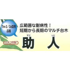 台木用トマト 助人 100粒 カネコ種苗|green-loft|02