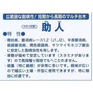 台木用トマト 助人 100粒 カネコ種苗|green-loft|03